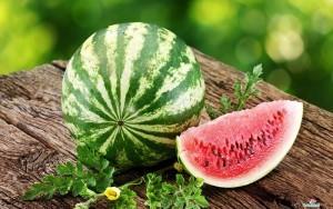 gambar cara menanam semangka image