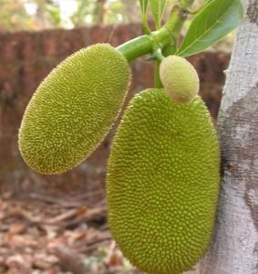 gambar manfaat buah nangka muda image