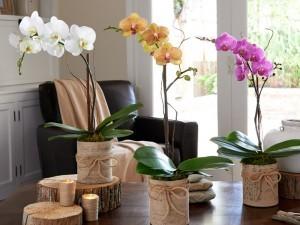 gambar cara menanam bunga anggrek dengan media pot image