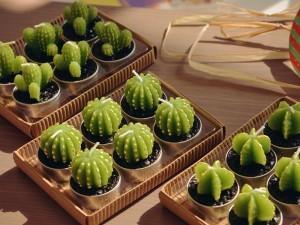 gambar bunga kaktus mini nan eksotik image
