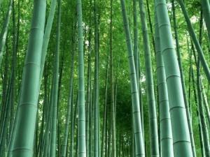 gambar pohon bambu image