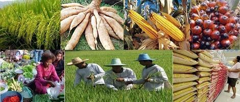 Peluang Bisnis Pemasaran Hasil Pertanian Menggunakan Internet