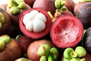 Langkah Jitu Menanggulangi Hama Thrips Pada Budidaya Manggis