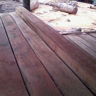 Jual kayu rasamala kualitas super