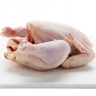 DI Cari Mitra Supplier Ayam Chicken Frozen Karkas