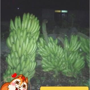 Jual aneka pisang + buah-buah lainnya