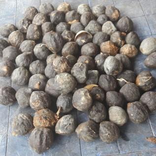 Jual suplai : jambu mete & kemiri glondongan; cabe rawit merah & kriting; kopra gudang; arang tempurung;jagung pipil dll