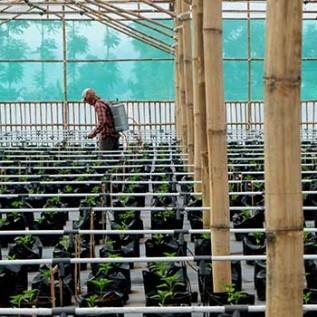 Jual jasa pembuatan greenhouse, irigasi tetes, fogging system dan smart farming system