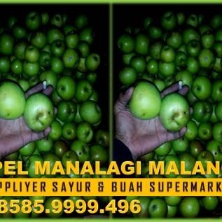 Jual Apel Manalagi