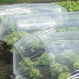 Jual plastik sungkup berguna untuk pembenihan tanaman