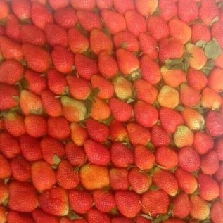Jual buah strawberry fresh & frozen ciwidey