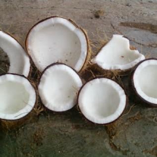 Jual kelapa tua promo