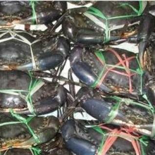 Jual suplayer lobster,udang dan ikan