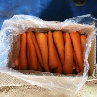 Jual wortel brastagi