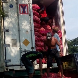 Jual bibit jahe merah, jaminan penjualan hasil panen