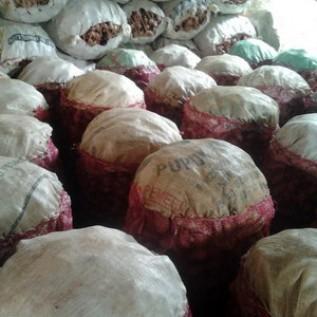 Jual Laos / Lengkuas Putih Basah Harga ekonomis