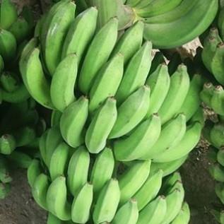 Jual pisang lokal
