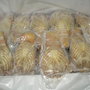Jual udang kipas siap order