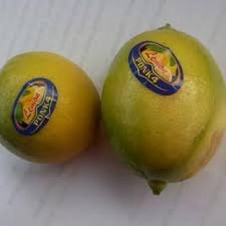 Jual fresh lemon