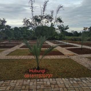 Jual kebun kurma di kabupaten bogor