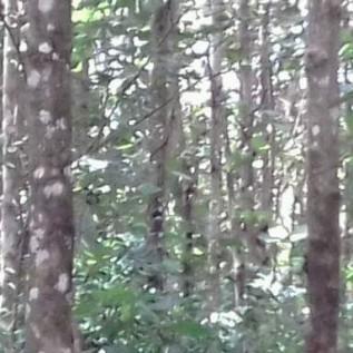 Jual Pohon Jati Asal Sulawesi Tenggara
