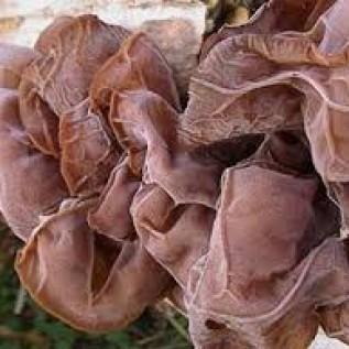 Jual jamur kuping kering dan basah