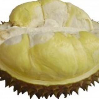 Jual bibit durian montong uk 40-60cm siap tanam di purworejo