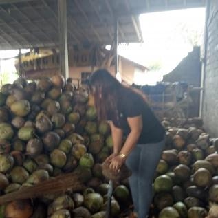 Jual jyal kelapa bali kewalitas bagus