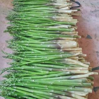 Jual fresh asparagus bandung
